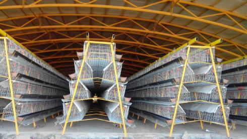 قیمت ، تولید و فروش عمده قفس حمل مرغ زنده