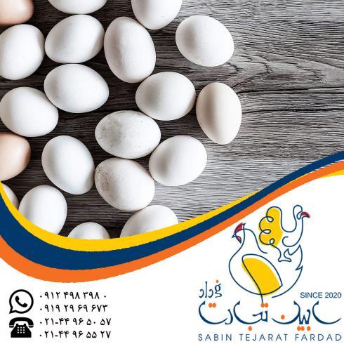 خریدار تخم مرغ خوراکی سفید سابین تجارت