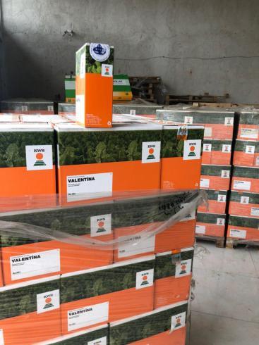 فروش بذر چغندر ، فروش بذر پیا ، فروش بذر گوجه ، فروش بذر خیار و انواع بذر صیفیجات و سبزیجات