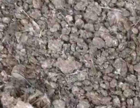 کود خشک بلدرچین