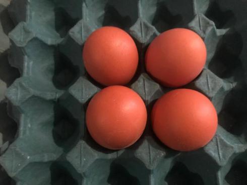 فروش تخم نطفه دار گلپایگانی