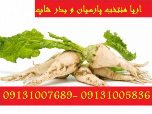 فروش و قیمت انواع بذر چغندر 09131007689_09131005836