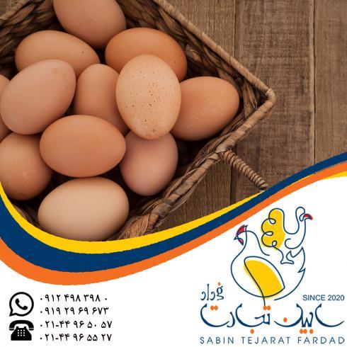 خریدار تخم مرغ خوراکی قهوه ای سابین تجارت