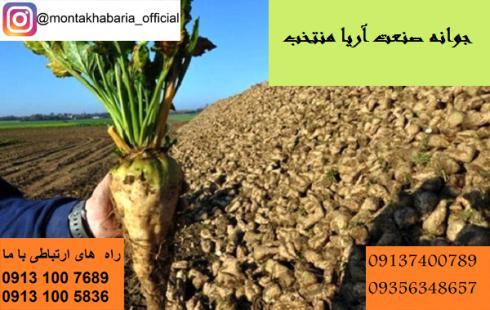 فروش بذر چغندر وارداتی