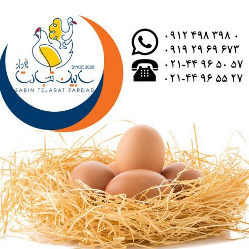 صادرات تخم مرغ خوراکی قهوه ای سابین تجارت
