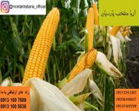 فروش بذر ذرت