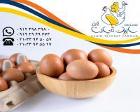 خرید و فروش و صادرات تخم مرغ خوراکی محلی سابین تجارت