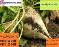 فروش انواع بذر چغندر قند