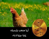 فروش مستقيم مرغ تخم گذار در انواع نژاد