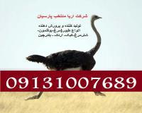 فروش جوجه شترمرغ درسال99،فروش جوجه اردک