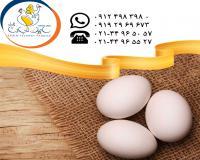 تامین و عرضه تخم مرغ خوراکی سفید سابین تجارت