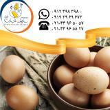 فروش و صادرات تخم مرغ خوراکی قهوه ای سابین تجارت