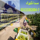 تولید سبد بسته بندی ، قیمت سبد انگور