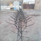 تولید و پخش حفاظ بوته ای و شاخ گوزنی
