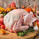 فروش گوشت بوقلمون -شرکت سابین تجارت
