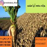 فروش بذر چغندر قند