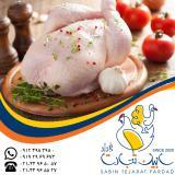 تامین و عرضه گوشت مرغ گرم سابین تجارت