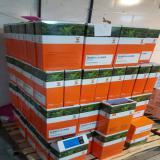 فروش مستقیم بذر چغندر آلمانی