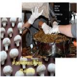 پرورش قارچ و ورمیکولیت