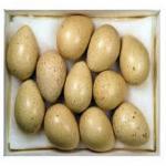 فروش تخم نطفه دار با راندمان جوجه آوری بالا