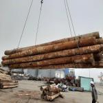 خرید و فروش چوب گرده بینه روسی , طوس ، بریوزا
