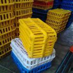 تولیدی قفس طرح پلاستیران ،فروش جعبه طیور زنده