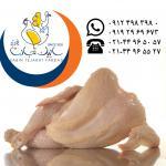 فروش گوشت مرغ گرم سابین تجارت