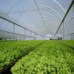 توليد کننده نايلونهاي عريض ۳ لايه گلخانه اي-کشاورزي و صنعتي