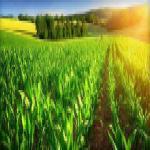 فروش شرکت رتبه 5 کشاورزی